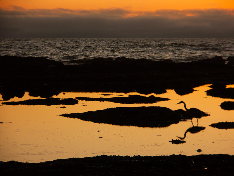 Sunset, James V. Fitzgerald Marine Reserve, California, 2005