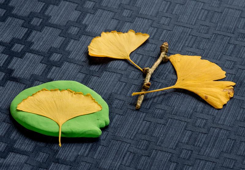 Lab 35 opener - Ginkgo leaf impressions