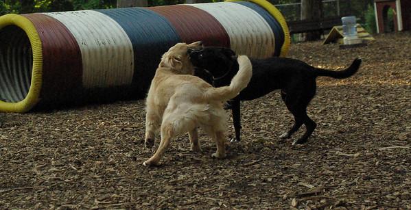 PICS JUNE 13::Hazel (pup girl), Blackjack