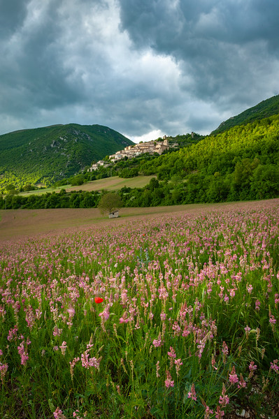 Red Poppy in Umbria (1 of 1).jpg