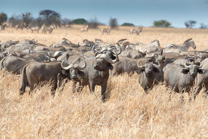Africa - 102116 - 8196.jpg