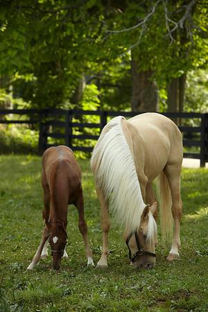 Saddlebred Book Update Thursday