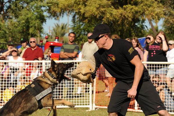 11-17-12 Dogs at Park in Havasu