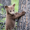 1.......................Photo shoot with an adorable cub @JasperNP