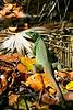 Iguana found roming on a tropical lush island. Photography fine art photo prints print photos photograph photographs image images artwork.