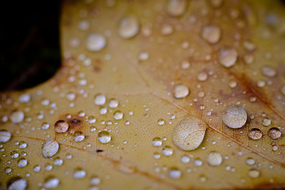 Droplets, vains and a leaf [#014]