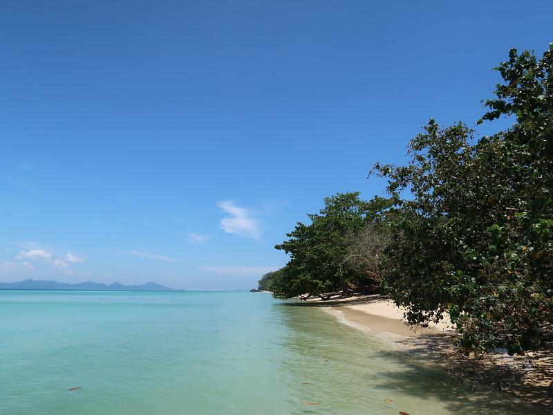 IMG_4274-beach-trees.JPG