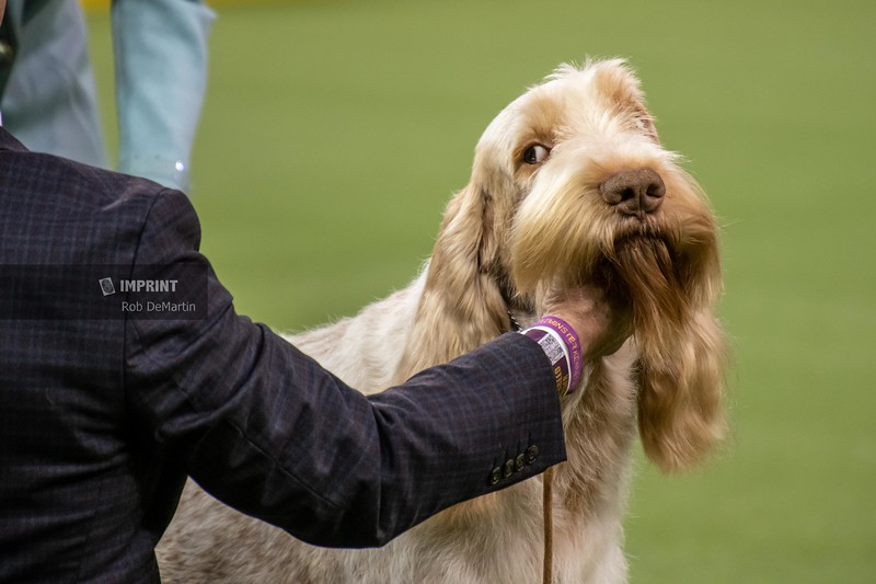 Westminister Kennel Club Dog Show at Madison Square Garden - New York City, NY | 02.10.2020