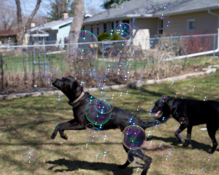 Dogs with Bubbles