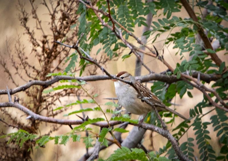 Sparrow_01b.jpg