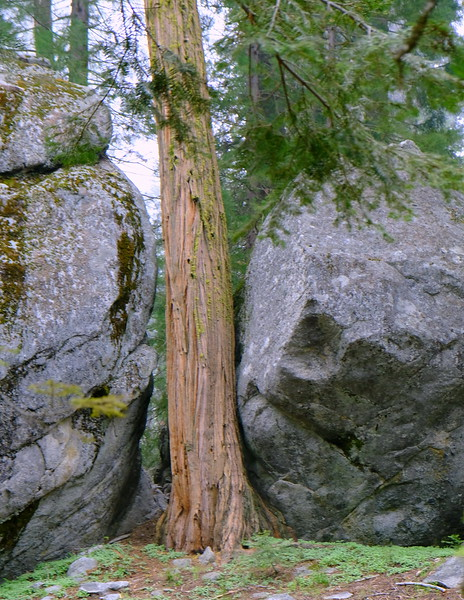 California Day 6 Sequoia 05-30-2017 110.JPG