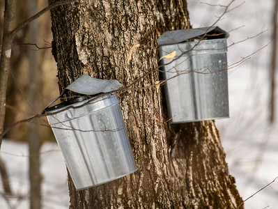 Sugaring and Woodcrew