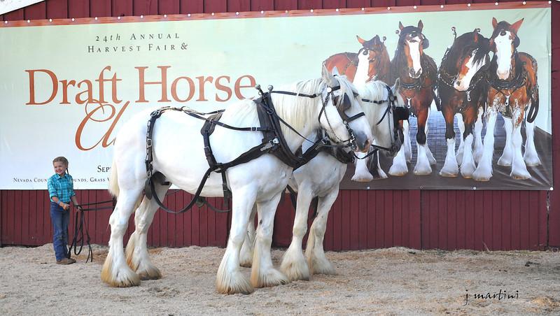 draft horse girl 8-14-2010.jpg