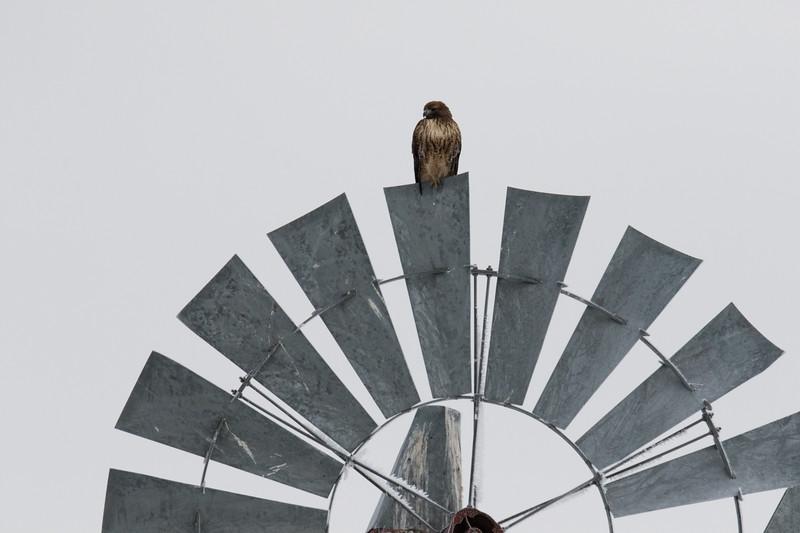 Sierra Hawks Winter 2018-6.jpg