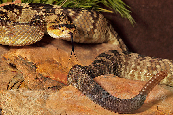 Snakes, Snakes, and More Snakes