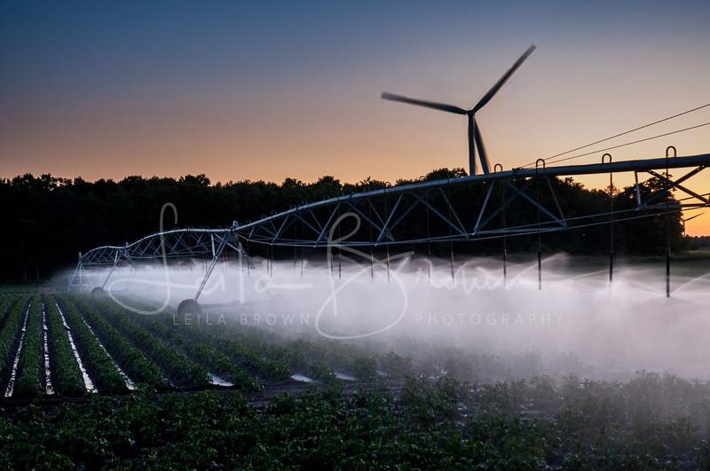 Irrigation field.jpg