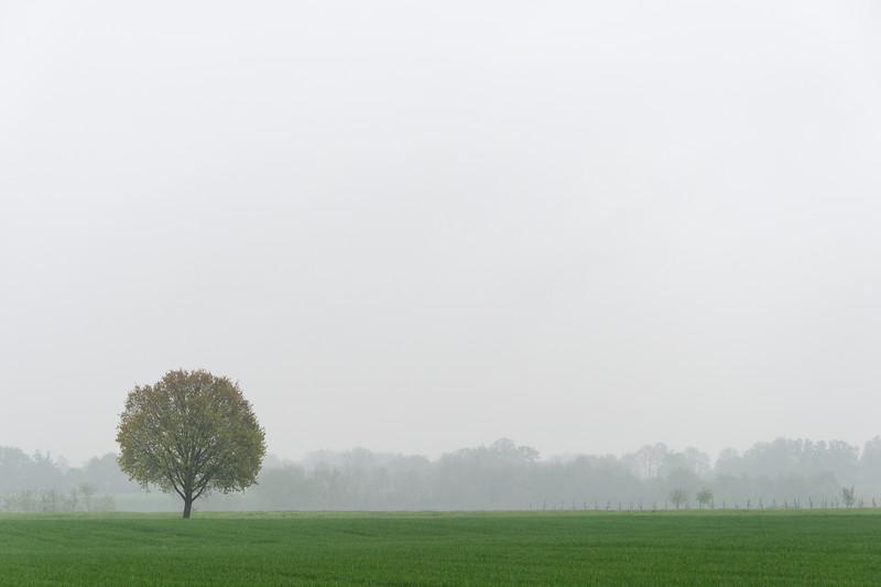 Lonely Tree - Albinea, Reggio Emilia, Italy - April 14, 2019