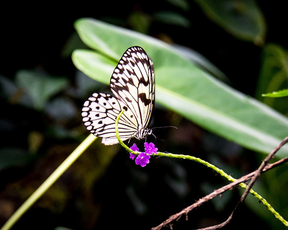 Ft. Worth - Butterflies in the Garden 2014