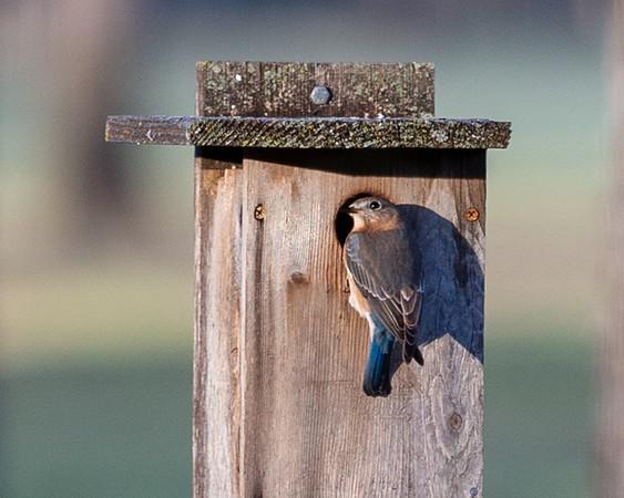 Birds return to Pecan