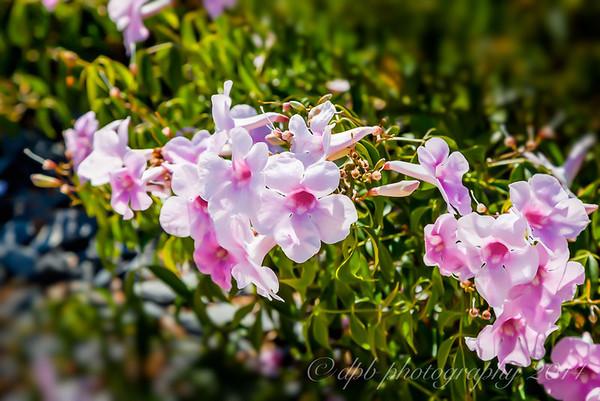 Royal Botanical Gardens, Cranbourne, VIC, Australia