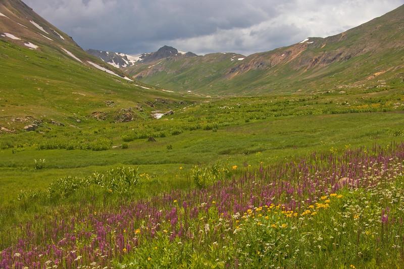 California Gulch wild flowers  near Silverton Colorado