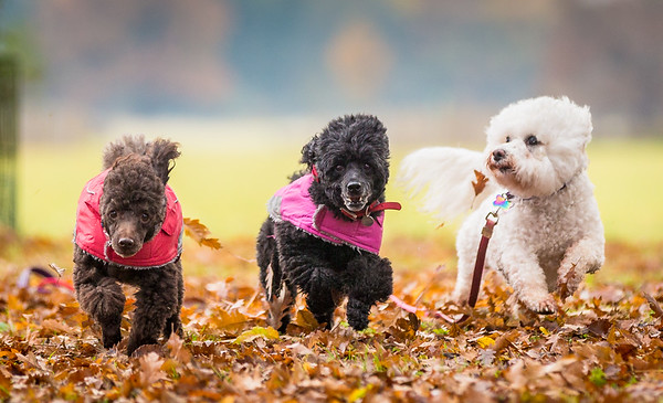 Daisy, Dusty & Alfie