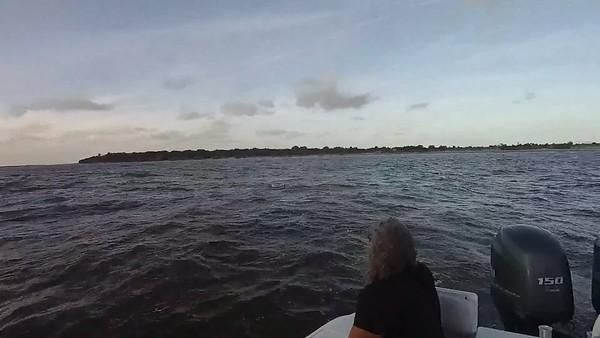 Jekyll Island Boat Tours Dolphin Daze Dolphin Videos no date -1