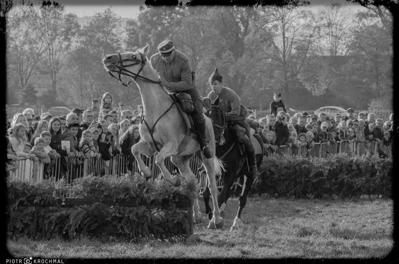 Festival of horses