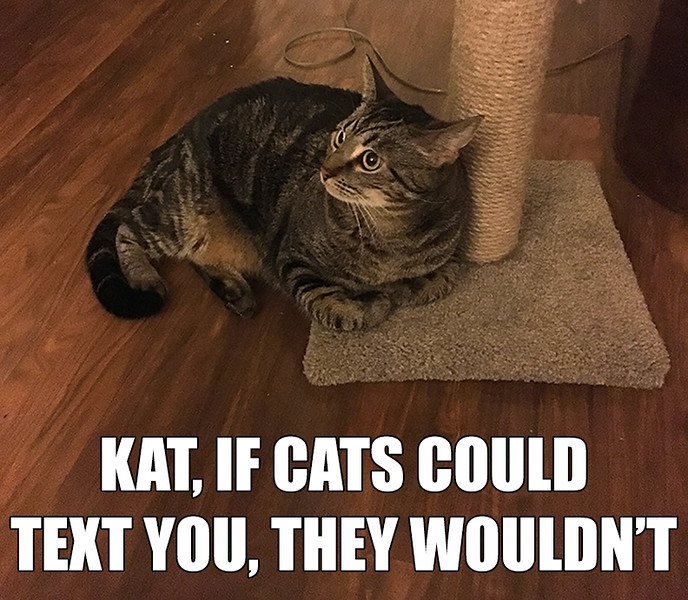 Cats Could Text.jpg