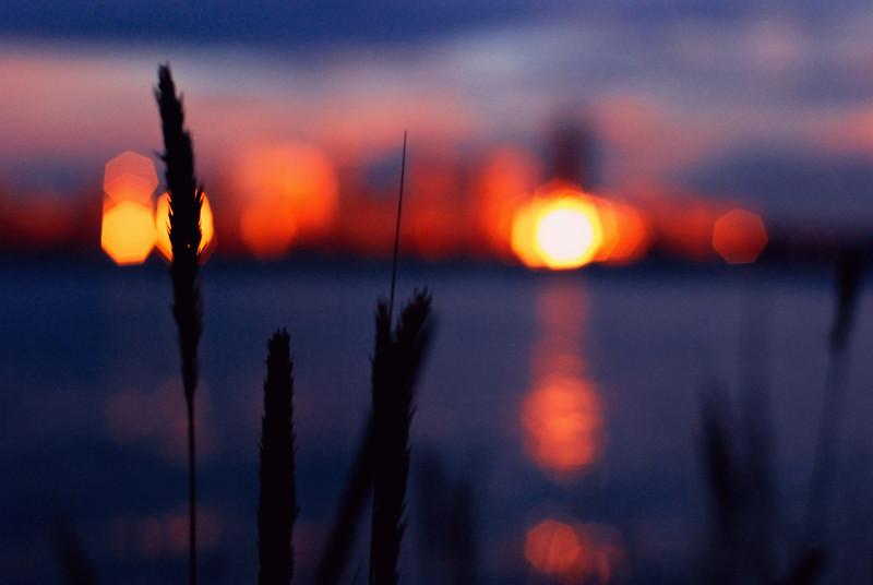 moody reflection seattle grass silhouette.jpg