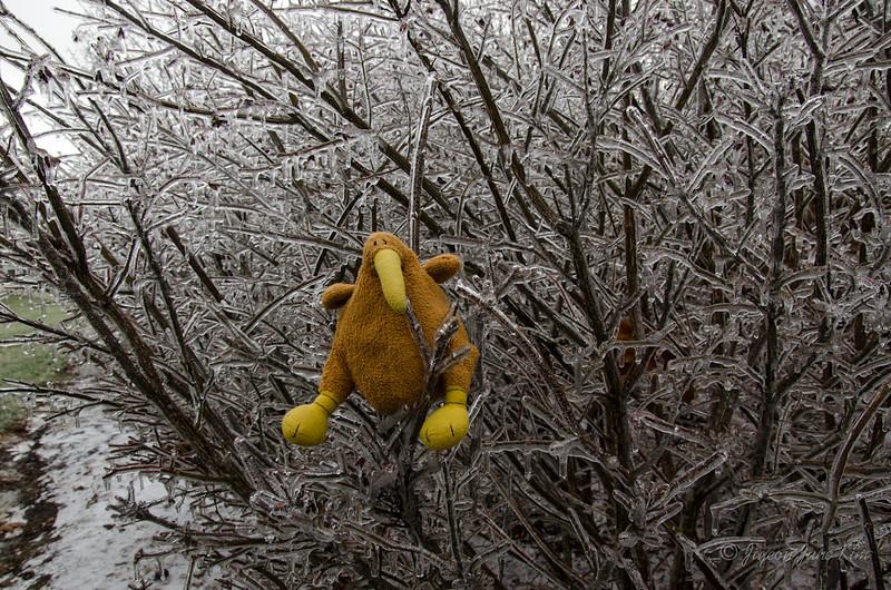Winter-7166.jpg