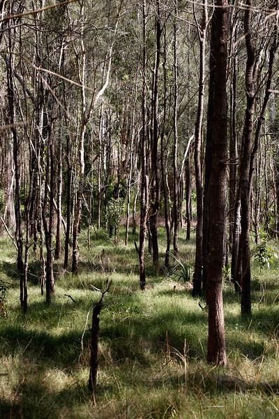 Boondall_Wetlands_Reserve #1.jpg
