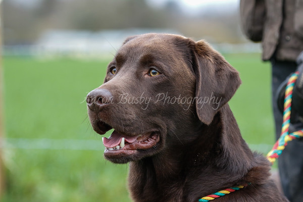 Hall Farm Shoot 26th January