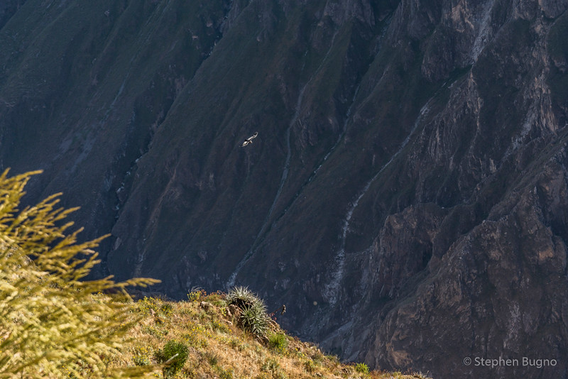 Colca Canyon-1198.jpg