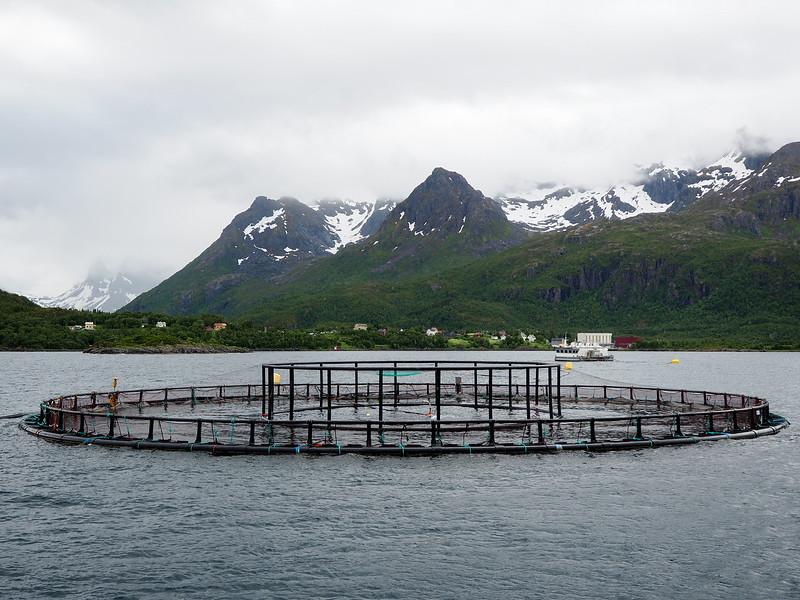 Salmon farming in Norway