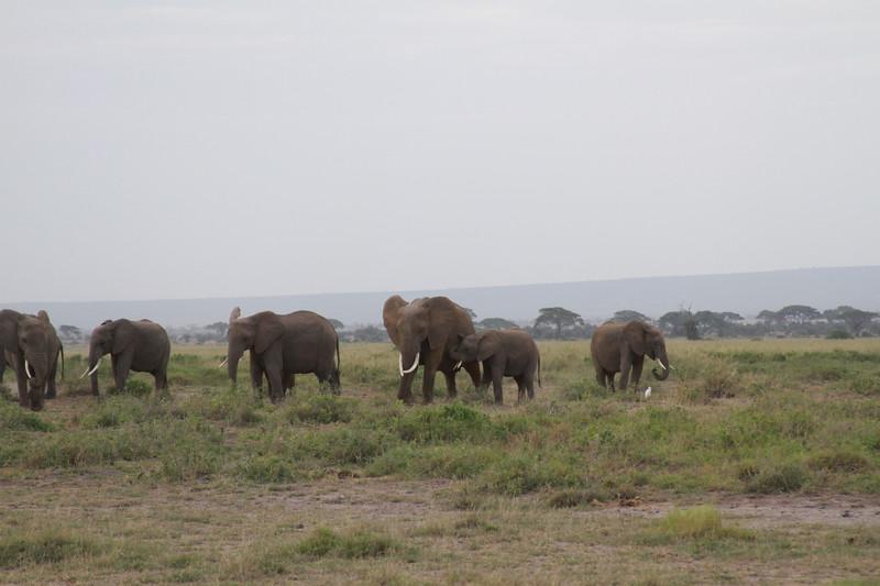 Kenya 2019 #2 413.JPG