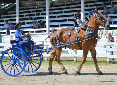 25 Sunday, August 25, 2013 Men's Cart Class Draft Horse