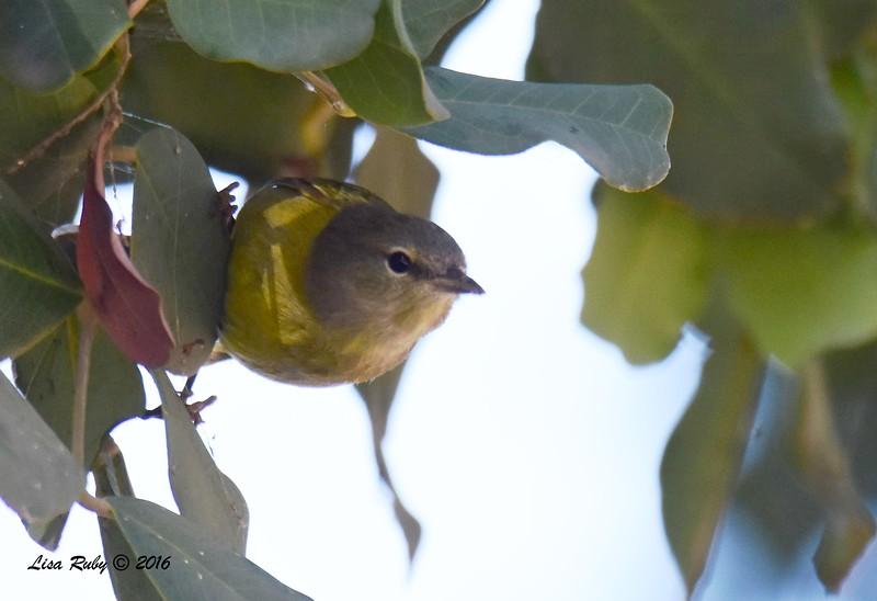 DSC_7834_mysterybird.jpg
