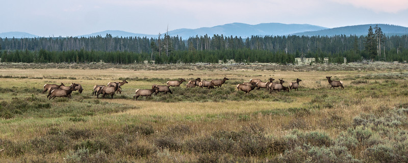 Yellowstone-8784.jpg