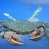 Rockport crab flees Harvey