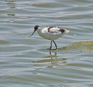 Birds of Amboseli