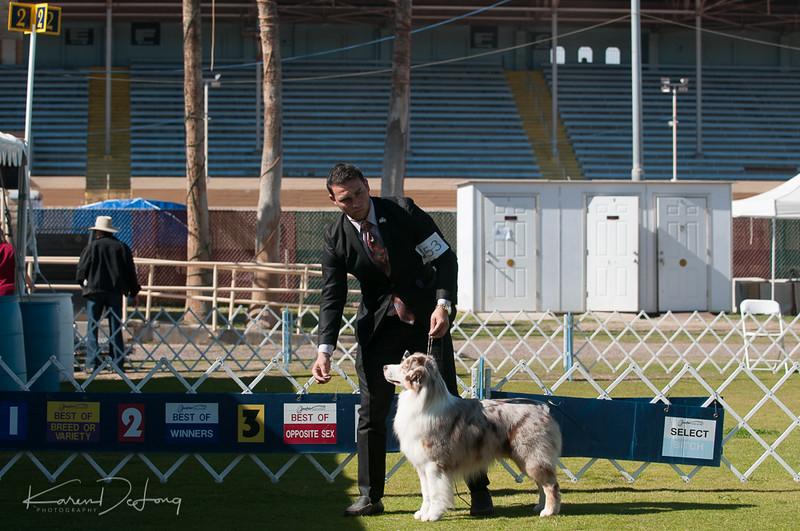 20170205_Australian Shepherds_Lost Dutchman Kennel Club-197.jpg