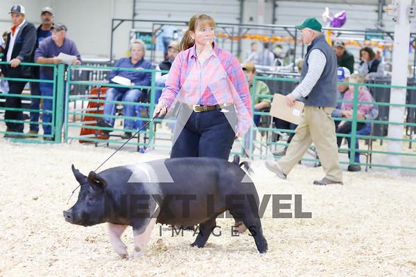 2016 Market Hog Show