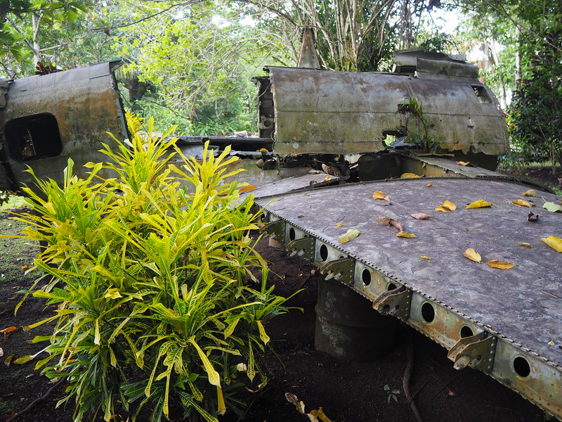 PA270044-plane-garden.JPG