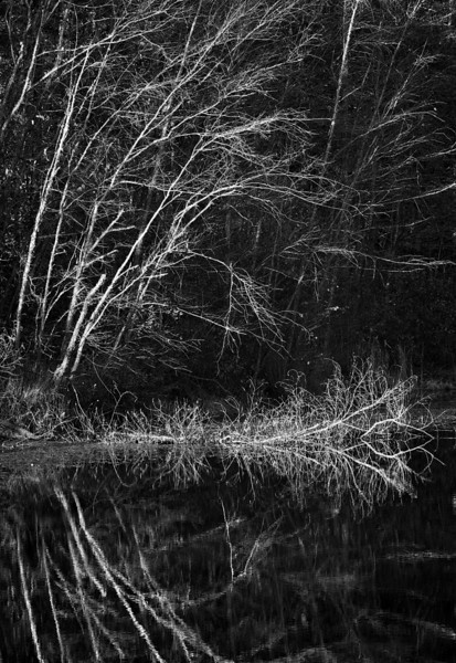 Bare branches along a lake.  Converted to black and white and Photoshop filters applied.