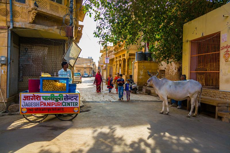 India-220.jpg