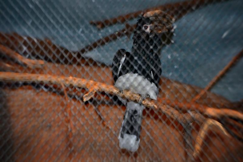 Brookfield Zoo Jan 2012