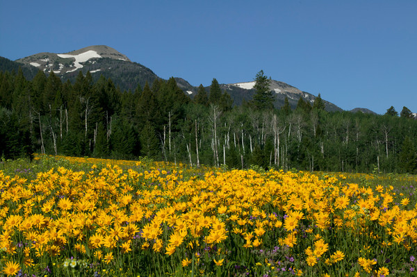Wildflower Landscapes