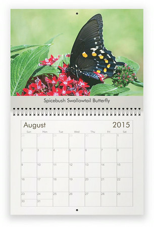 2015 Insects Wall Calendar