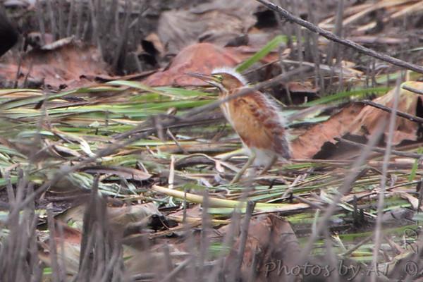 2011-08-06 Riverlands Migratory Bird Sanctuary